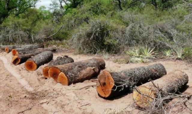 Fondo Verde para el Clima destinará US$ 82 millones para combatir la deforestación en la Argentina