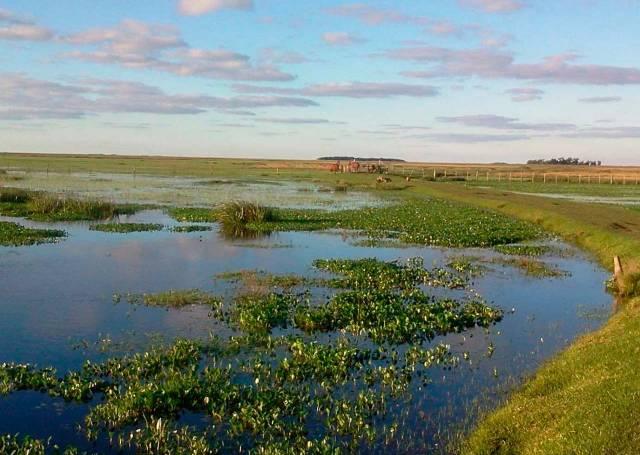 Humedales argentinos: agroecosistemas relevantes desde lo ambiental y productivo