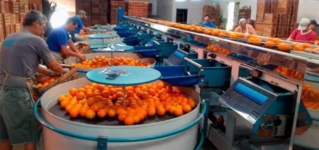Por la sequía, habrá fuerte merma de cítricos en 2021