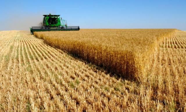 Buenos Aires produjo el 59% del total país de trigo