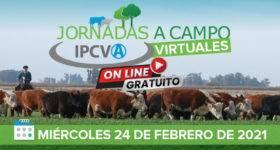 El IPCVA retoma las jornadas virtuales a campo