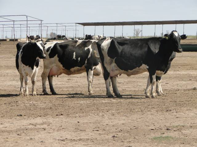Mínimo incremento en el precio de la leche para productores en julio