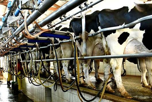 ¿De los productores de leche… quién se acuerda?