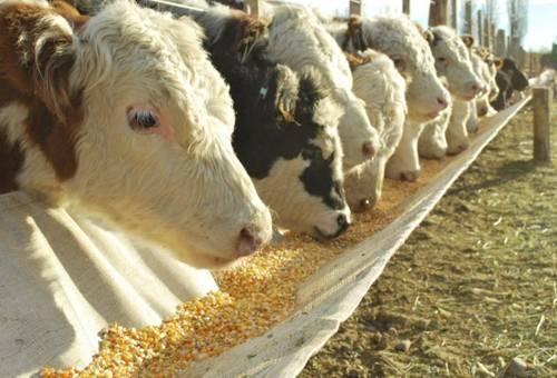 Voces a favor de la suspensión temporal del registro del maíz