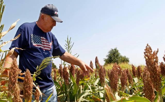 """Por qué los """"farmers"""" de EE.UU. le ponen fichas al sorgo"""