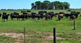 Pautas para prevenir el estrés calórico en el ganado bovino ante temperaturas elevadas