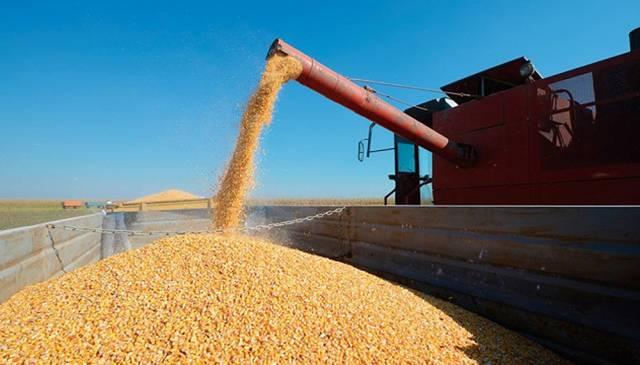 Entre enero y agosto de este año, las ventas externas argentinas de los complejos de los principales granos alcanzaron los 37.229 millones de dólares.