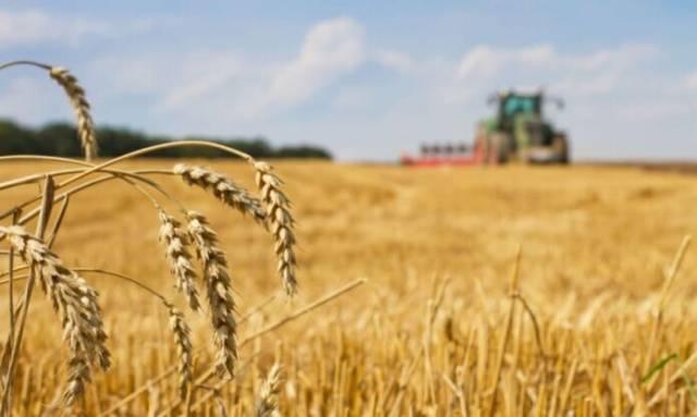 Continúa la apuesta al mejoramiento y diferenciación de trigo, en la provincia de Buenos Aires