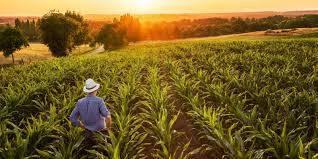 El sector agropecuario y la seguridad de un negocio rentable