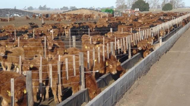 Afectados por el cierre de exportaciones, feedloteros pierden unos 7 mil pesos por animal