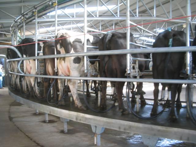 Fuerte expectativa en el mercado lácteo: los precios alcanzarían su máximo en 20 meses
