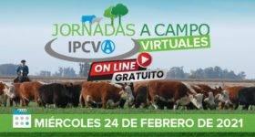 La próxima semana arranca el IPCVA con su jornadas virtuales