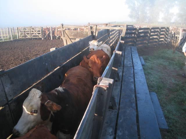 Actualizan el Plan Nacional de Control y Erradicación de Brucelosis bovina