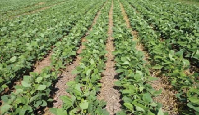 Preocupan las altas temperaturas en el desarrollo de los cultivos